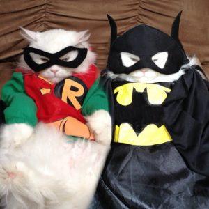 Gatos super heroes