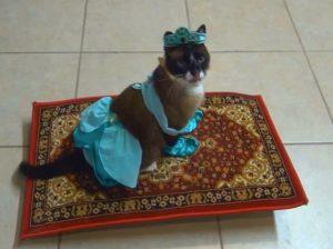 gato en alfombra voldora