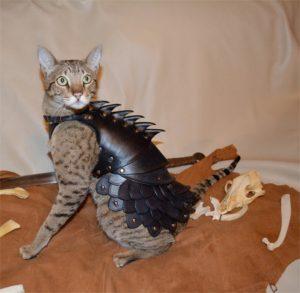gato caza dragones armadura de cuero