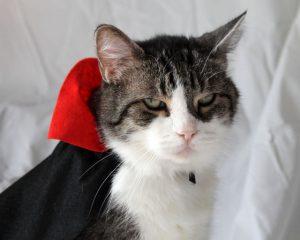 Disfraz gato vampiro
