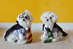 Malteses disfrazados de Potter y Malfoy
