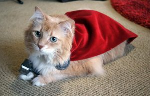 Gato disfrazado de Thor