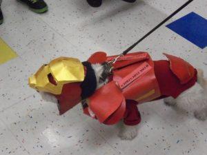 Perrito ironman