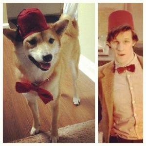Perro con Fez. 11º Doctor Who.