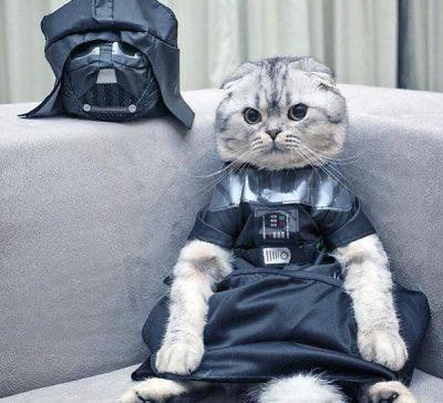 Los disfraces de gatos más frikis y divertidos