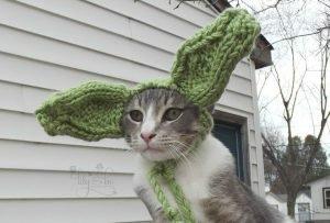 gato orejas de yoda