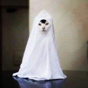 divertido gato disfrazado fantasma