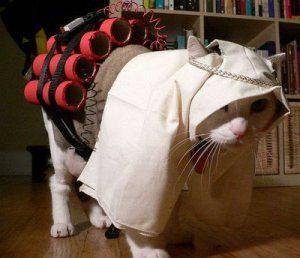 Disfraz gato terrorista