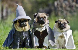 Gandal, Frodo y Galadriel versión perruna
