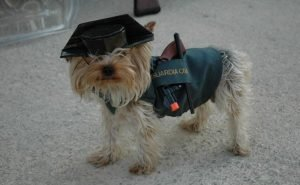 perro-guardia-civil
